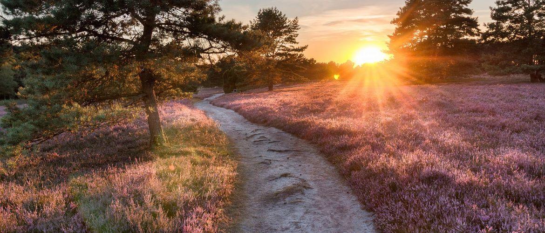 Lueneburger Heide iStock694412842